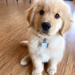 4 Ways To Puppy-Proof Your Apartment
