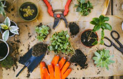 5 ขั้นตอนเปลี่ยนระเบียงคอนโด ให้เป็นแปลงผักขนาดย่อม!